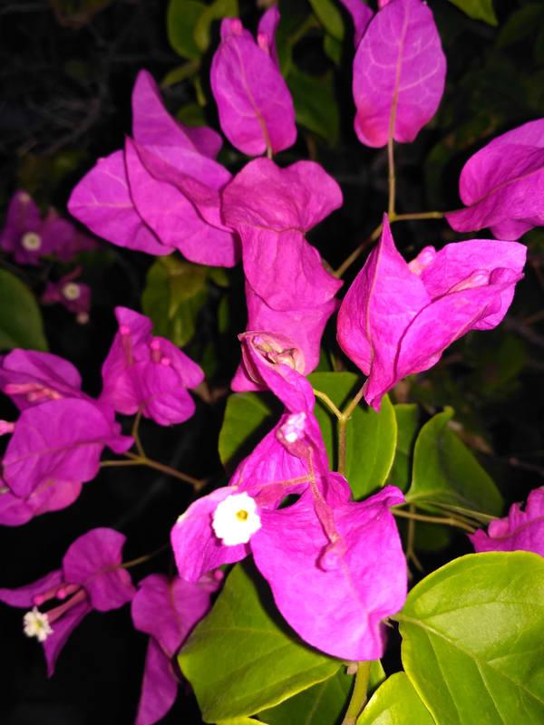 http://images.vfl.ru/ii/1549375248/3e47d8d0/25264878_m.jpg