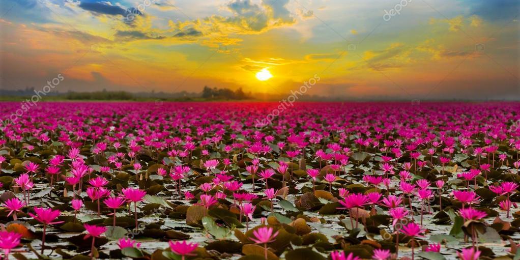 http://images.vfl.ru/ii/1551463788/5be29c64/25599767.jpg