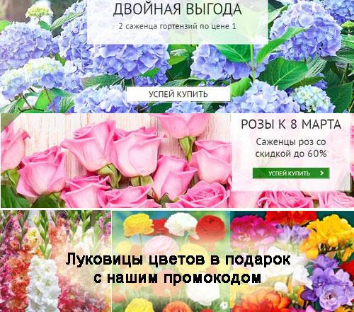 Промокод Беккер. Розы со скидкой до 60%. Гортензии 1+1. Бесплатная доставка. Семена и луковицы в подарок