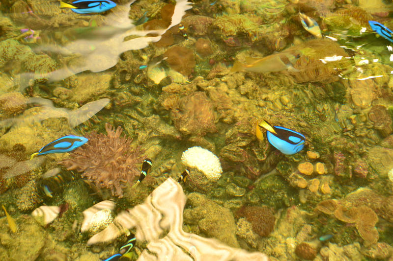 http://images.vfl.ru/ii/1553341319/01d0b2c8/25886404_m.jpg