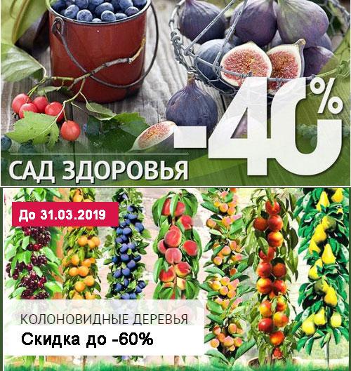 Промокод Беккер. До 40% на плодовые деревья, полезные ягоды и декоративные растения. Бесплатная доставка. Семена в подарок