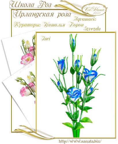 Выпуск Школы роз. курс - Ирландская роза 25942139_m