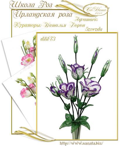 Выпуск Школы роз. курс - Ирландская роза 25942136_m