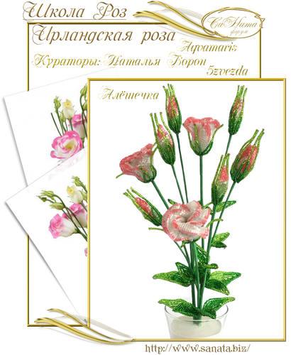 Выпуск Школы роз. курс - Ирландская роза 25942143_m