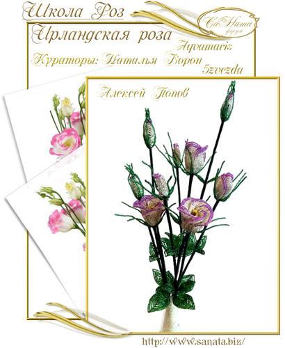 Выпуск Школы роз. курс - Ирландская роза 25942142_m