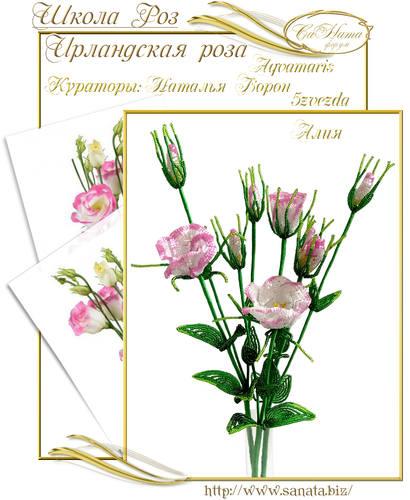 Выпуск Школы роз. курс - Ирландская роза 25942144_m