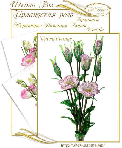 Выпуск Школы роз. курс - Ирландская роза 25942148_m