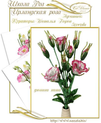 Выпуск Школы роз. курс - Ирландская роза 25942146_m