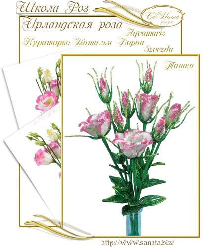 Выпуск Школы роз. курс - Ирландская роза 25942153_m