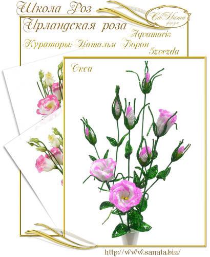 Выпуск Школы роз. курс - Ирландская роза 25942151_m