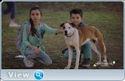 http//images.vfl.ru/ii/1554418280/8b329b87/26059589.png