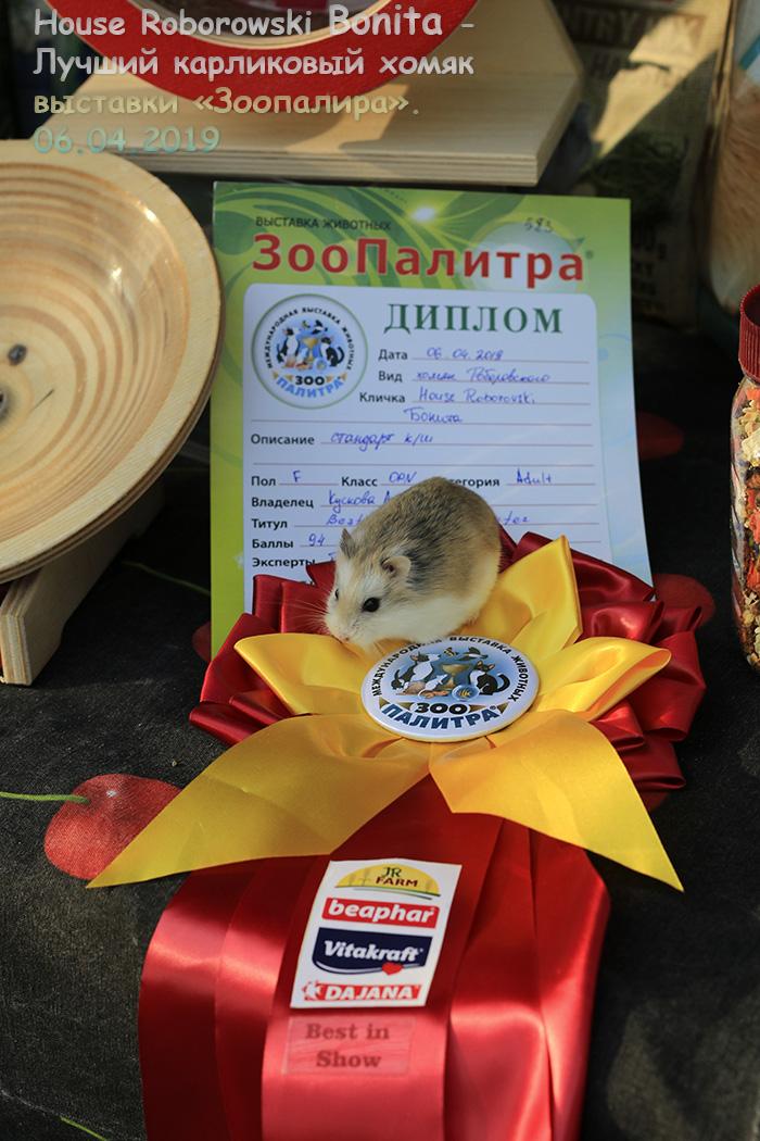 http://images.vfl.ru/ii/1554825450/0b5c6969/26127410.jpg