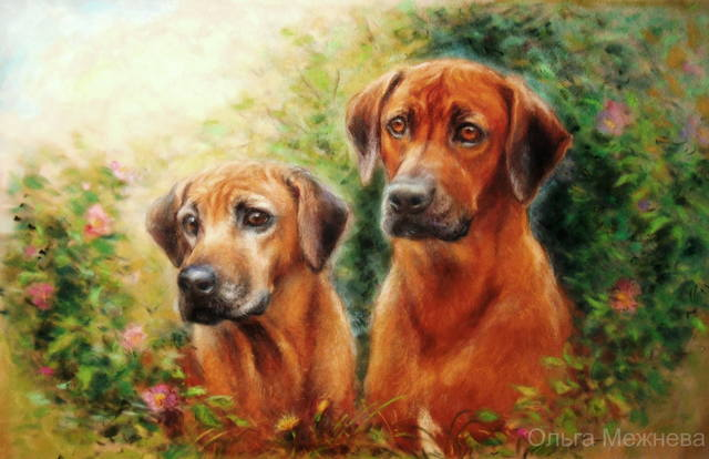 Рисую собак по фото - Страница 17 26164513_m