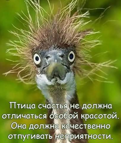 http://images.vfl.ru/ii/1555263175/fae4500f/26187539_m.jpg