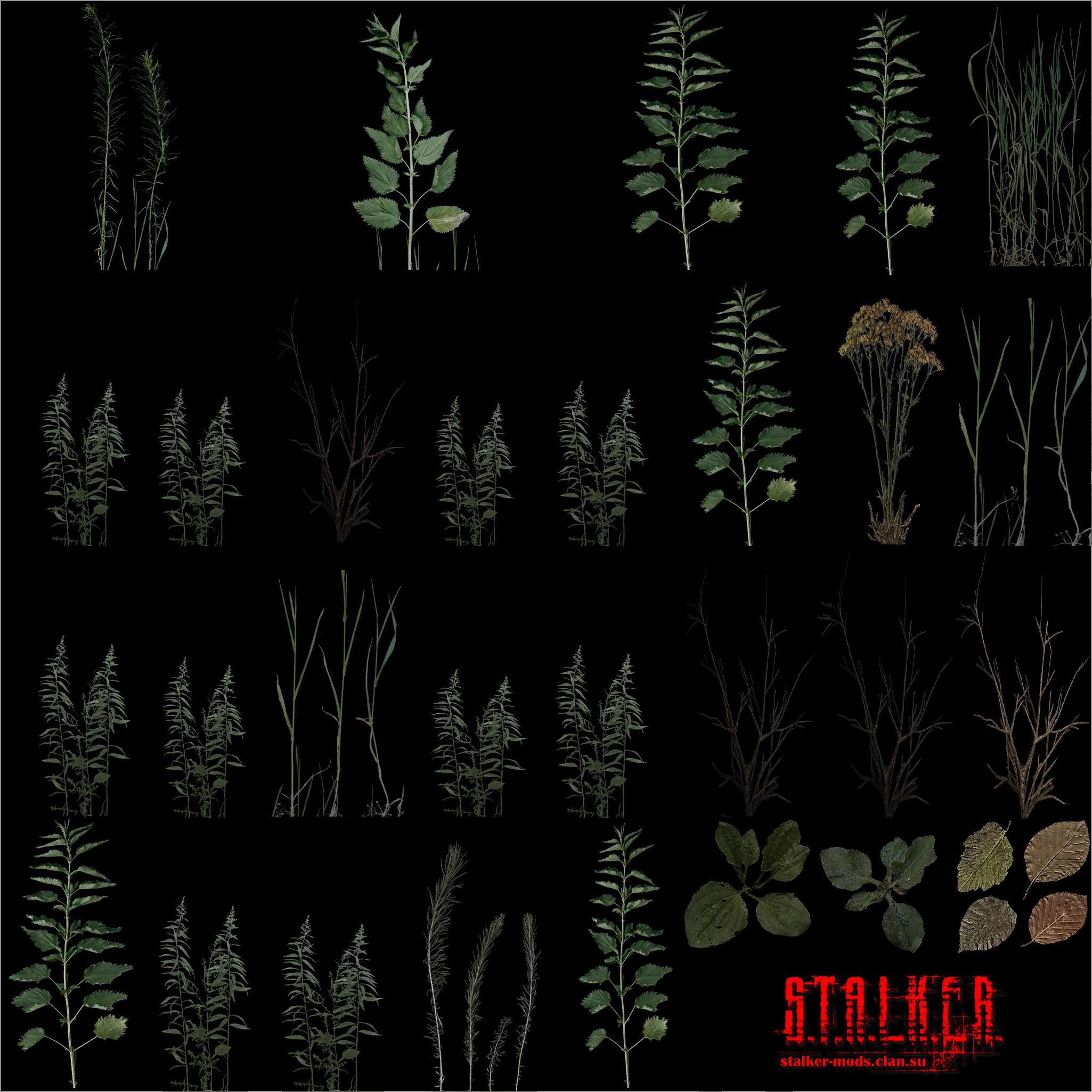 текстура растительности
