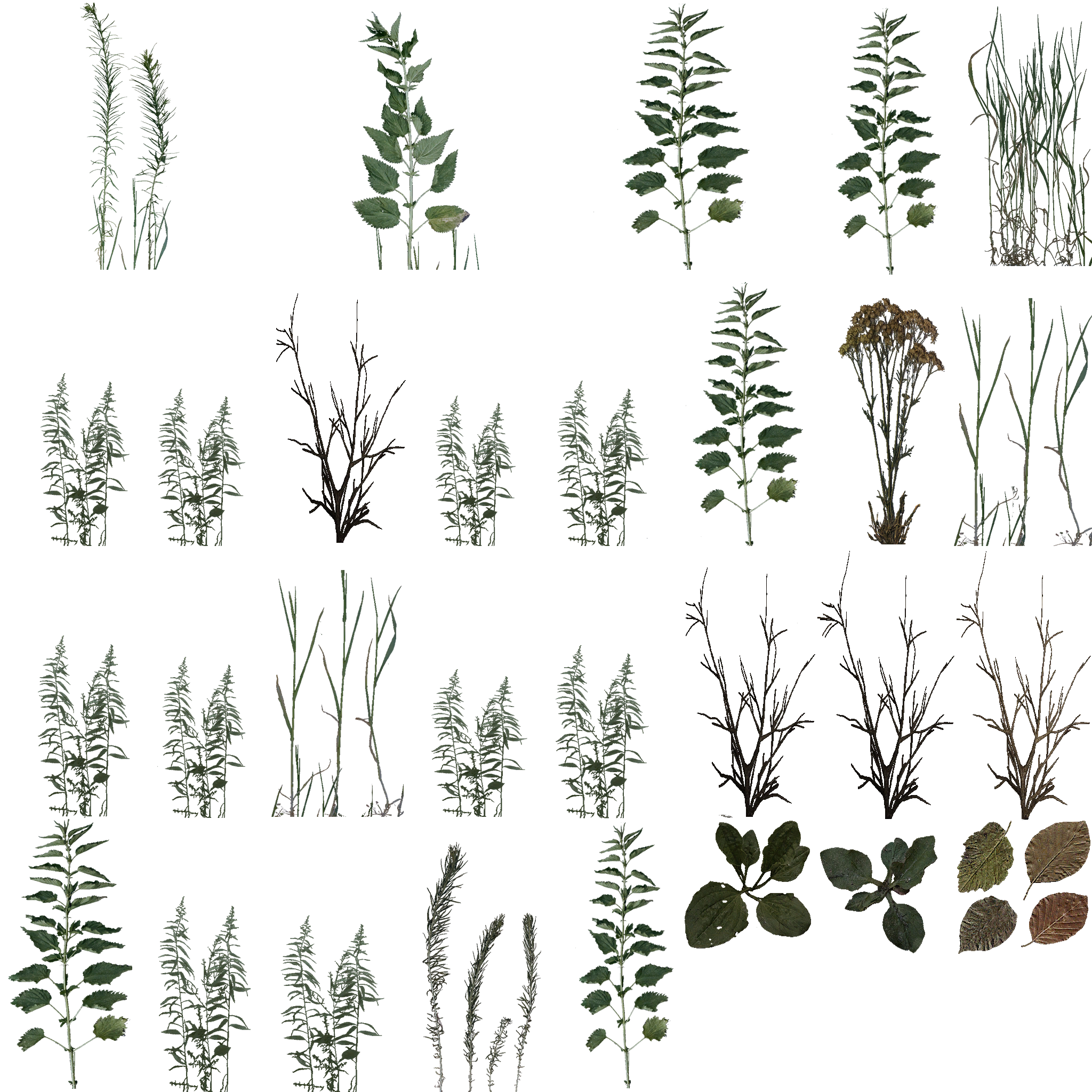 новая текстура травы
