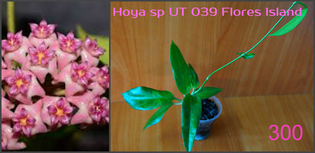 http://images.vfl.ru/ii/1557052822/8ea4a23c/26424429_m.jpg
