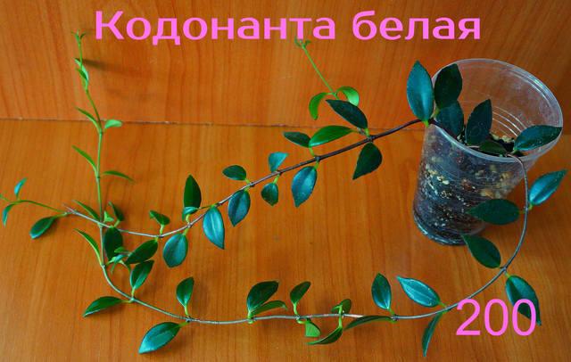 http://images.vfl.ru/ii/1557052921/e18d3c7a/26424446_m.jpg