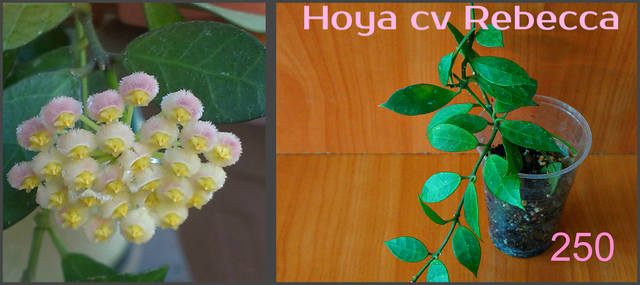 http://images.vfl.ru/ii/1557052939/a1f2a952/26424449_m.jpg