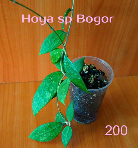 http://images.vfl.ru/ii/1557053002/6c2e7c44/26424460_m.jpg