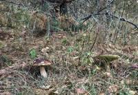 http://images.vfl.ru/ii/1557605724/66b8bb61/26500610_s.jpg