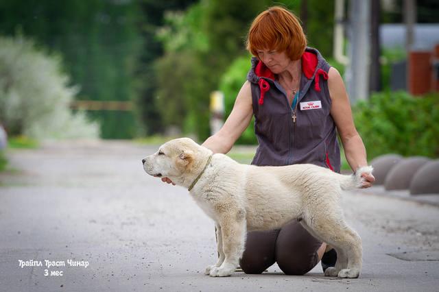 http://images.vfl.ru/ii/1557667972/0cb6c6a4/26507050_m.jpg