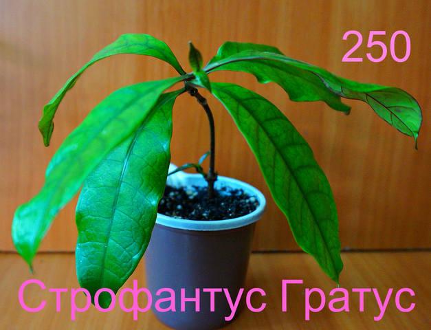 http://images.vfl.ru/ii/1558525833/7598f87e/26622838_m.jpg