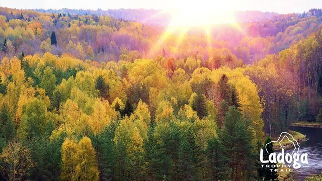 http://images.vfl.ru/ii/1559117302/7d3a72d3/26697494_m.jpg