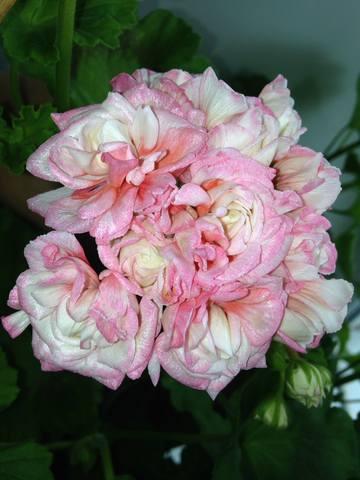 http://images.vfl.ru/ii/1559207424/0cc3971c/26709845_m.jpg