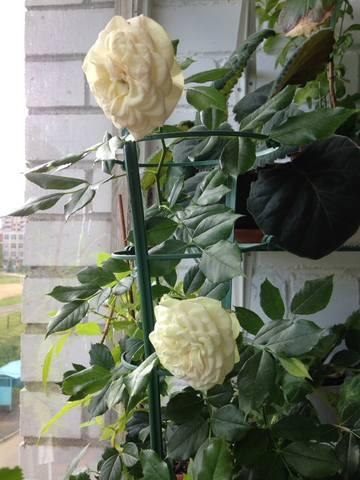 http://images.vfl.ru/ii/1559207559/6e4d6aa6/26709899_m.jpg