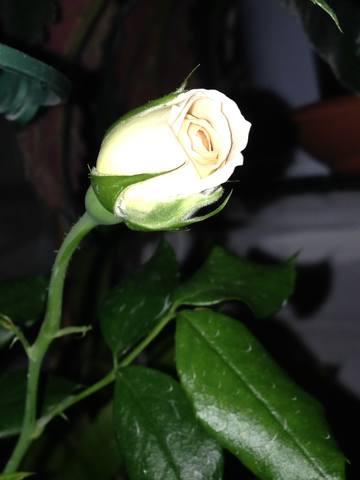 http://images.vfl.ru/ii/1559207559/817bd6aa/26709896_m.jpg