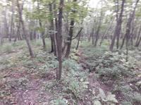 http://images.vfl.ru/ii/1559895036/15ace947/26810115_s.jpg