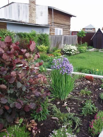 Ирисы в наших садах - Страница 42 26915405_m