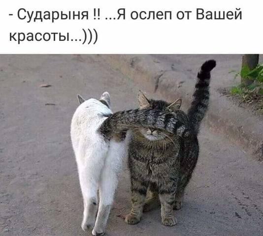 http://images.vfl.ru/ii/1563467209/3d883681/27252725_m.jpg