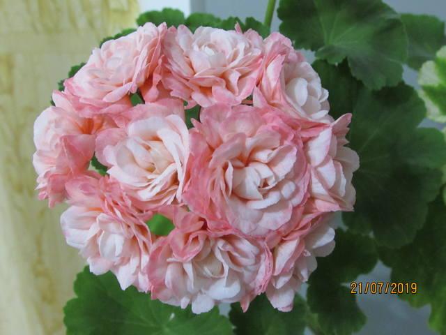 http://images.vfl.ru/ii/1563790698/79b5a10a/27289397_m.jpg