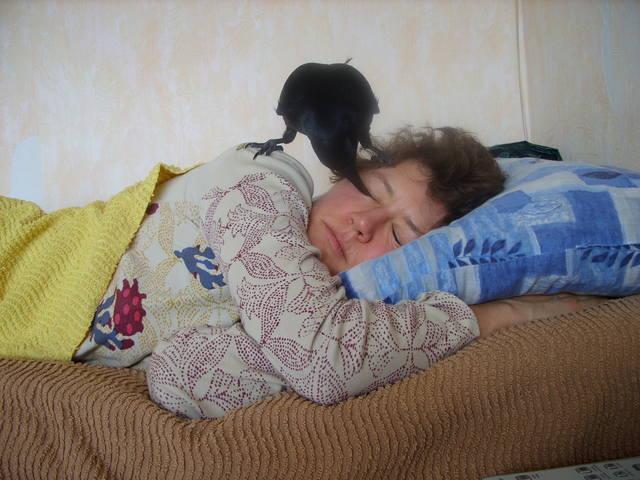 http://images.vfl.ru/ii/1563877144/7a34d08d/27303775_m.jpg