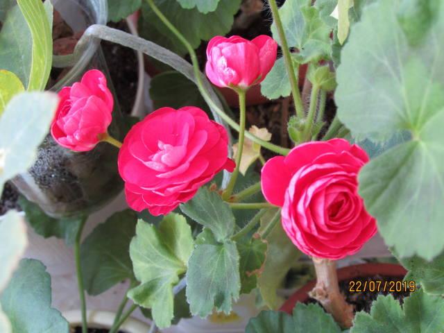 http://images.vfl.ru/ii/1563987085/d7160696/27320920_m.jpg