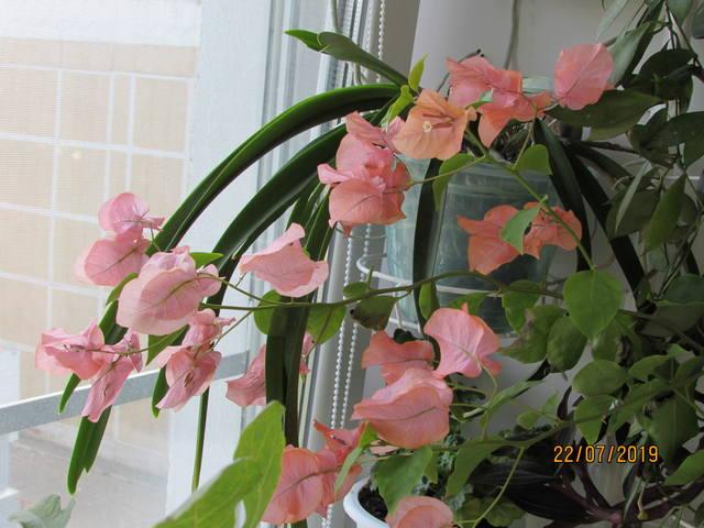 http://images.vfl.ru/ii/1563987086/aeec436a/27320922_m.jpg