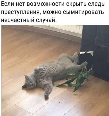 http://images.vfl.ru/ii/1564764224/ed11d428/27417911_m.jpg