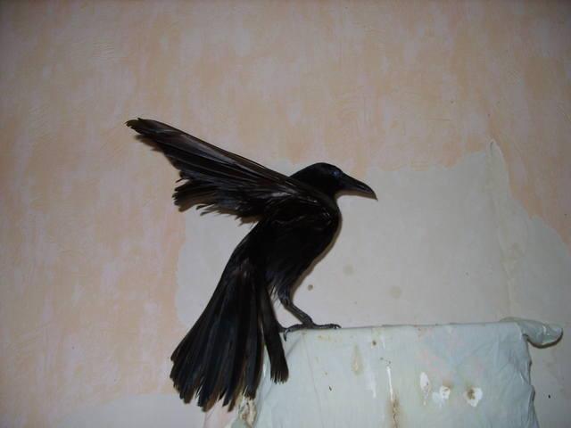 http://images.vfl.ru/ii/1565180062/785dc795/27468235_m.jpg