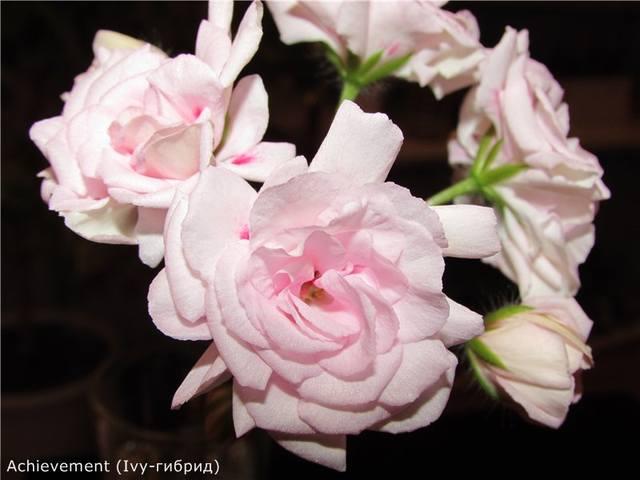 http://images.vfl.ru/ii/1565430781/394ee56a/27496466_m.jpg