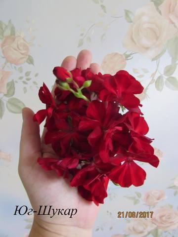 http://images.vfl.ru/ii/1565430781/3eb4574a/27496468_m.jpg