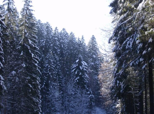 http://images.vfl.ru/ii/1565719545/559179b4/27531917_m.jpg