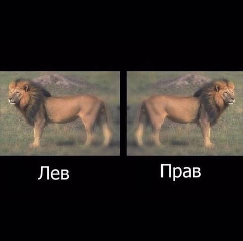 http://images.vfl.ru/ii/1566480555/57f5c70a/27621804_m.jpg