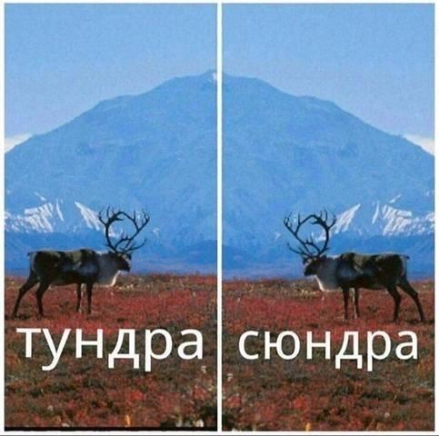 http://images.vfl.ru/ii/1566480618/3a25a287/27621809_m.jpg