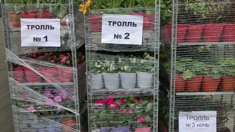 http://images.vfl.ru/ii/1567521016/19ece4a0/27748814.jpg