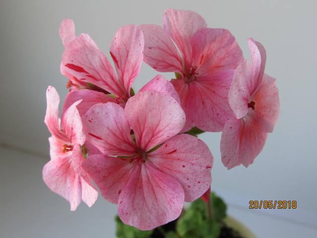 http://images.vfl.ru/ii/1567528813/7825056d/27749972_m.jpg