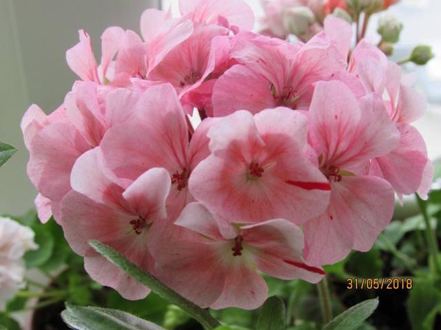http://images.vfl.ru/ii/1567528813/aa1ef39f/27749971_m.jpg