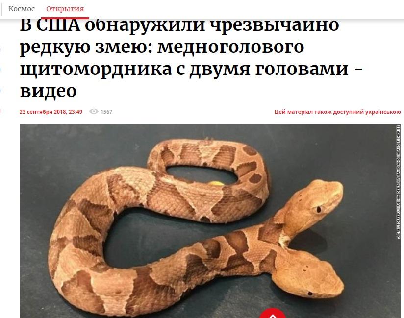 http://images.vfl.ru/ii/1569898022/c44fa211/28030631.jpg