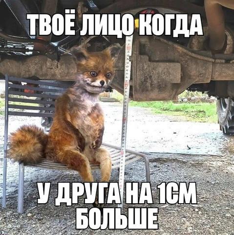 http://images.vfl.ru/ii/1570908155/43a47185/28170646_m.jpg